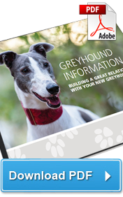 Download the Greyhound Adoption booklet (PDF)