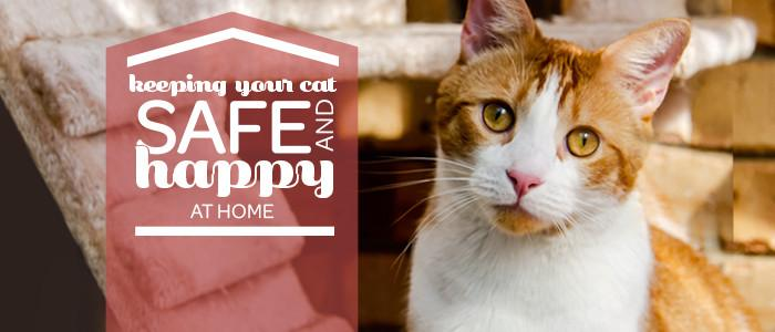 97221716d4 Keeping your cat safe and happy at home