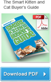 Download the Smart Kitten and Cat Buyer's Guide (PDF)