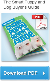 Download the Smart Puppy and Dog Buyer's Guide (PDF)